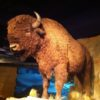 Glenbow Museum-Buffalo