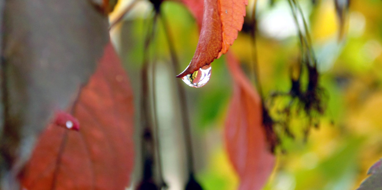 Fall Leaves with Water Drop
