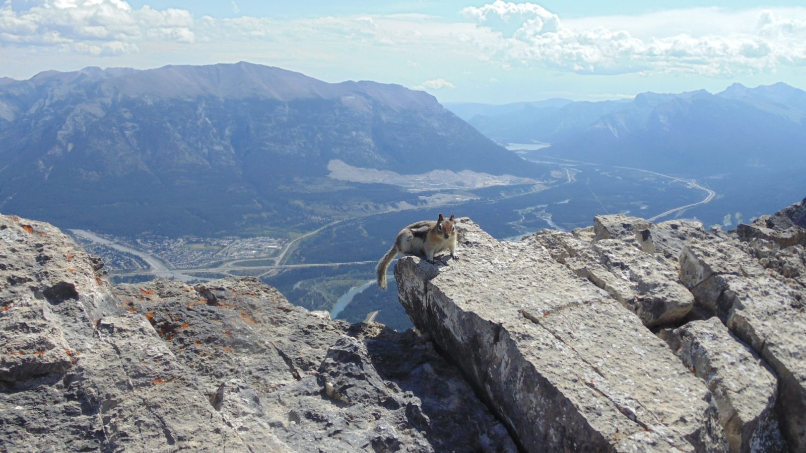 Chipmunk On Mount Ha Ling, Looking At Trans-Canada From Over Canmore