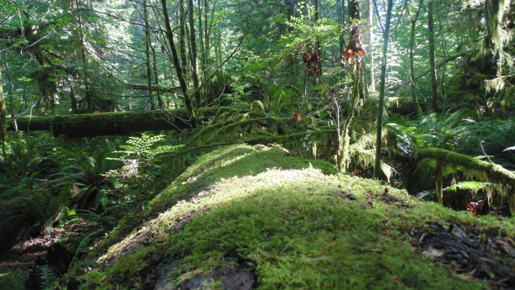 moss covered tree trunk at MacMillan Bloedel Provincial Park, Vancouver Island
