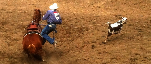 Calf-roping cowboy, Calgary Stampede
